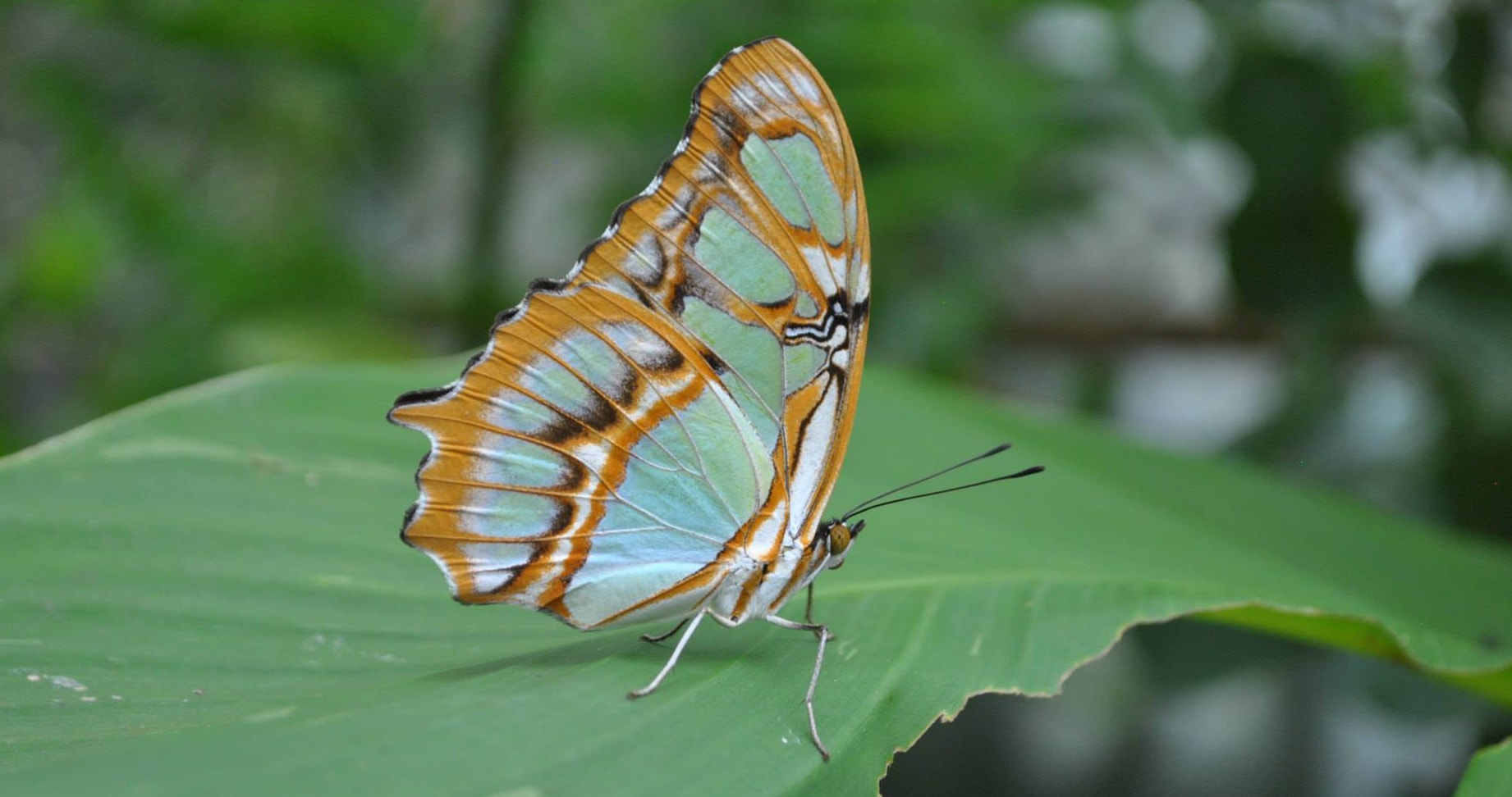 Pretty Butterfly on a Green Leaf